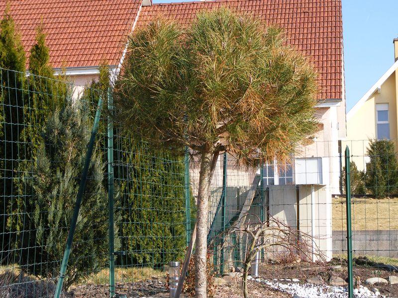 le forum des fous de palmiers 90 nouveau jardin. Black Bedroom Furniture Sets. Home Design Ideas
